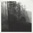 Trees, Fog