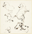 Sketches of a Horse in Motion