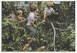 Children with Fallen Tree Series, #2