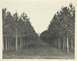 Kingscote Wood