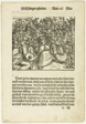 Illustration from Turnierbuch (Tournament Book), plate seven from Woodcuts from Books of the XVI Century
