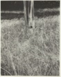 Grass and Flagpole