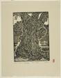 Ancient Tree in Georgetown, Washington, D.C.
