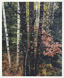 Trunks of Maple and Birch with Oak Leaves, Passaconaway Road, New Hampshire