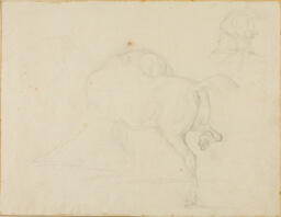 Study of a Horse Turning Its Head and Raising His Hind Leg