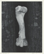 Bone Image #1