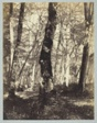Study in the Barbizon Forest