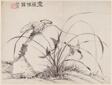 Orchids, Album of Twelve Leaves