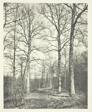 Hastings Wood