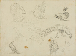 Sketches of Fowl