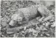 Stone Dog, Chippiannock Cemetery, Rock Island, Illinois