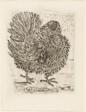 The Turkey, from Histoire naturelle