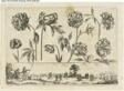 Flowers and Landscape, from Livre Nouveau de Fleurs Tres-Util