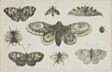 A Moth, Butterflies, and Bees