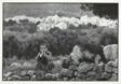 Boy Tending Goats, Spinalonga, Crète