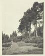 Heath Garden on Bank Above House