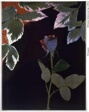 Flowers, Lab 212S (Rose II, Red Backlight)
